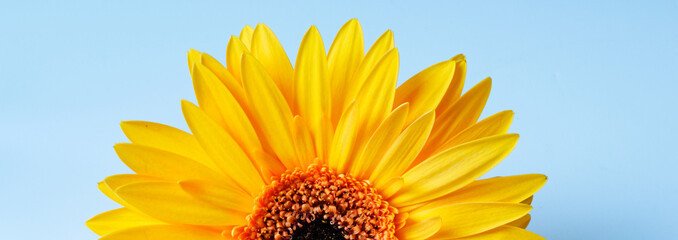 yellow sunflower on blue