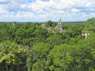 view over the old maya ruins and the peten jungle, tikal, guatem