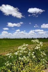 wild flowers, fields, and sky