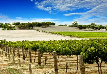 Fototapete - vineyard in spring