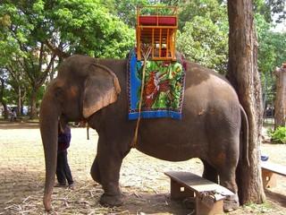 elephant, cambodia
