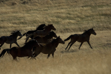 wild horses running in the grass