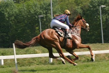horse at racetrack