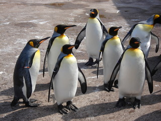Photo Blinds Antarctic group of penguins