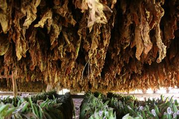 intérieur d'un séchoir à tabac