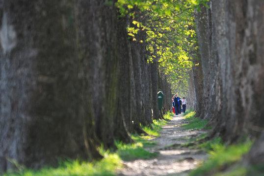 people walking at long alley