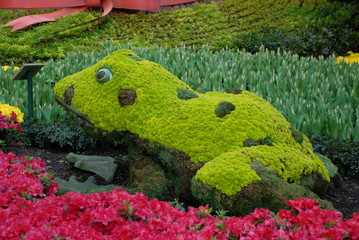 frog of yellow flowers
