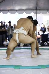 sumo wrestlers 16