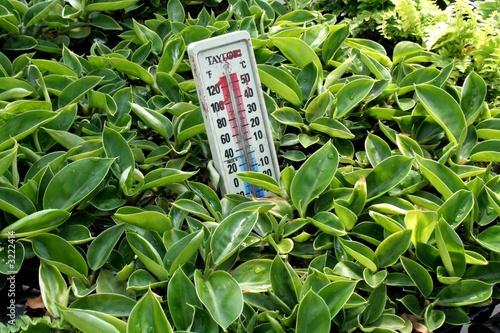 Plante int rieur photo libre de droits sur la banque d for Acheter plante interieur