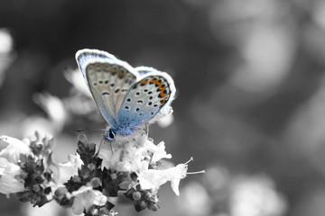 blue is beauty
