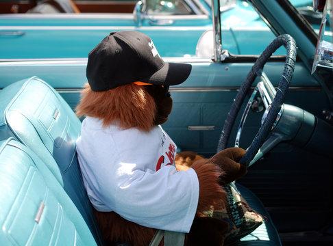 orangutan driving a classic