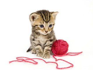 kitten with red ball of yarn on white background