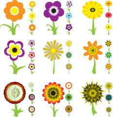 flower variation