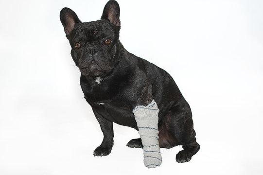 chien soigné