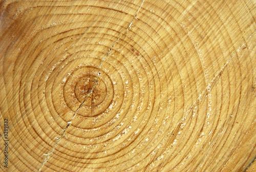 tronc d 39 arbre coup photo libre de droits sur la banque d 39 images image 3289832. Black Bedroom Furniture Sets. Home Design Ideas
