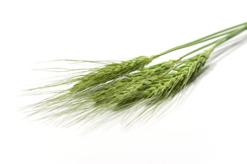green wheat ears isolated on white