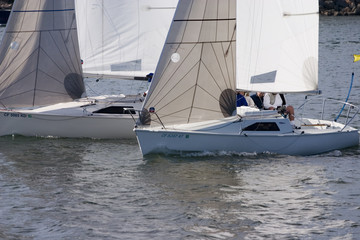 two sailboat racing in the harbor
