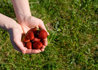 strawberries in woman hand