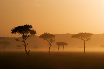 sunset in massai mara