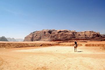 un solo cammello nel deserto