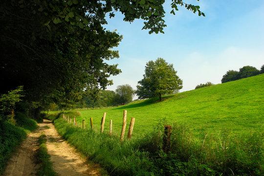 rural dirt track in grassland landscape.