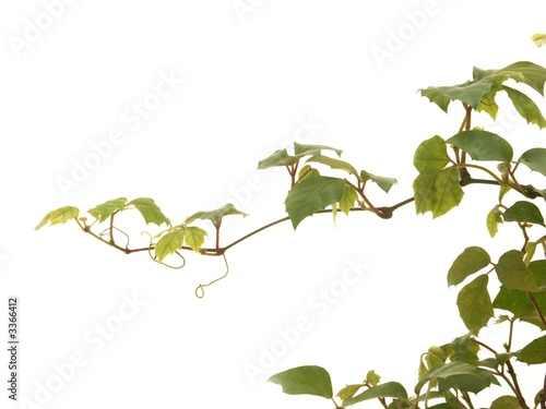 Plante Grimpante Stock Photo And Royalty Free Images On