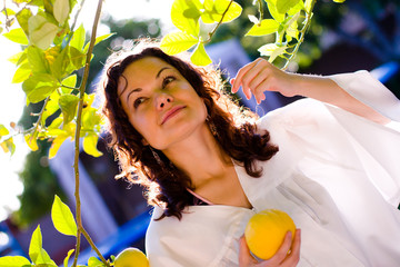 Wall Mural - young woman picking up a fresh lemon from tree