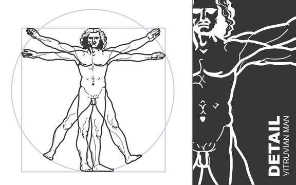 vitruvian man (vector)