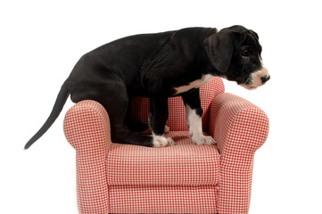 puppy and red armchair