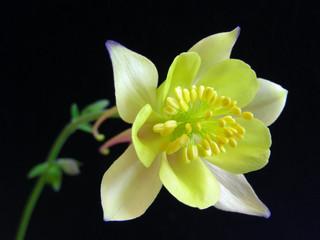 colorado flower