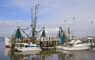 shrimp boat fleet
