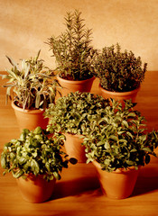 six kinds of aromatic herbs for cooking