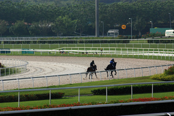 horse practicing in the race course