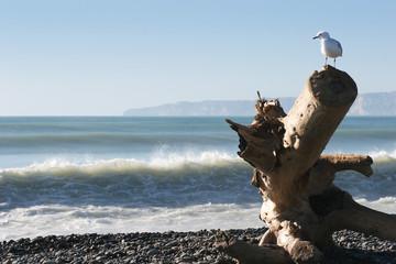 seagull's domain