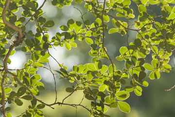 green leaves in sunlit afternoon