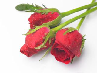 rose stems