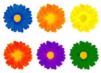 six colourful flowers