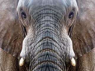 Symmetrical elephant