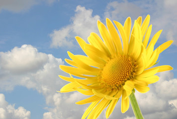 yellow flower on a background of the cloudy sky