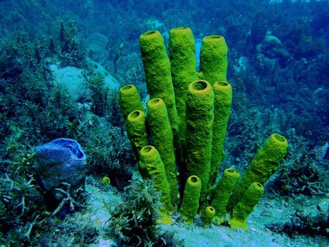 Eponges sous marines