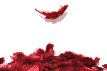 plumes rouges 02