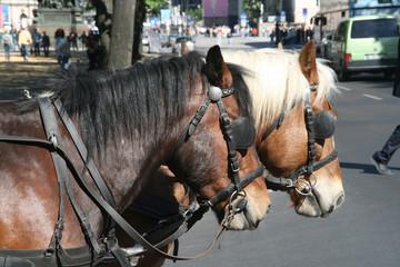 Pferdefuhrwerk in Berlin