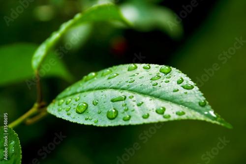 Как называются капли на листьях