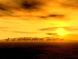 Antilopen auf der Wanderung