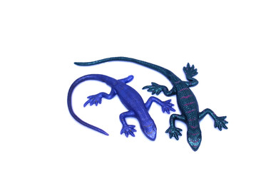A purple and a green lizard against a white background.