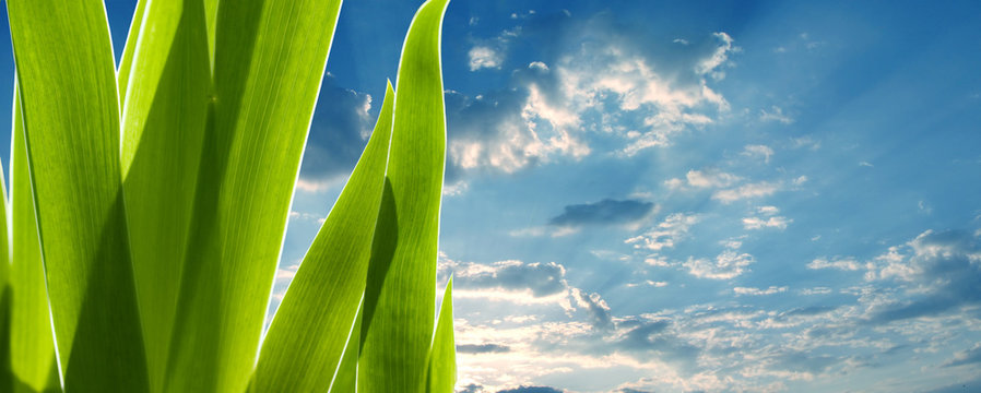 green leaves on the sky background. Environmental concept
