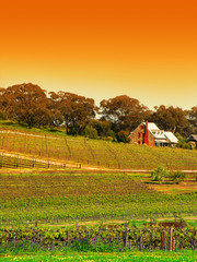 Wall Mural - Vineyard in the Barossa Valley