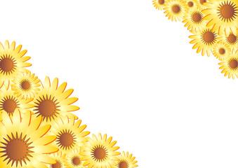 Marigold frame over white background