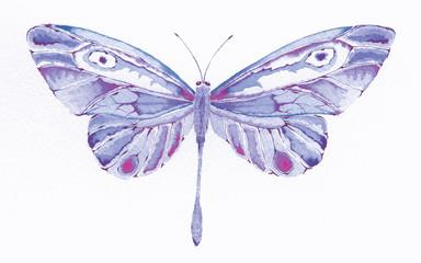 purple fantasy butterfly