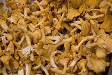 Gourmet Mushrooms in a Paris Market